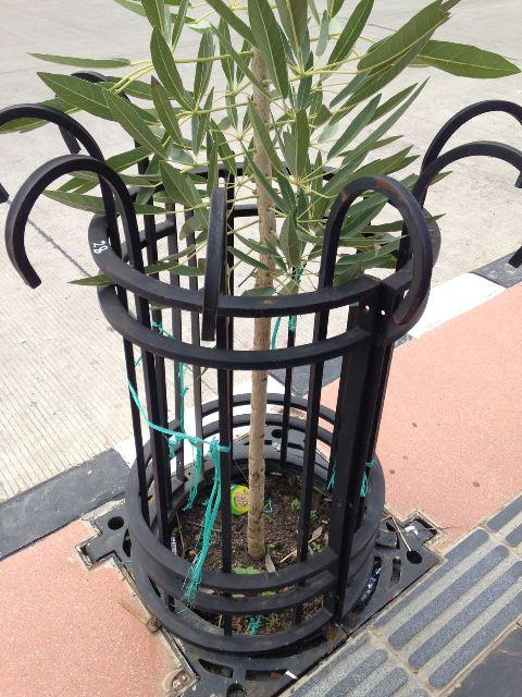 cast iron tree fence