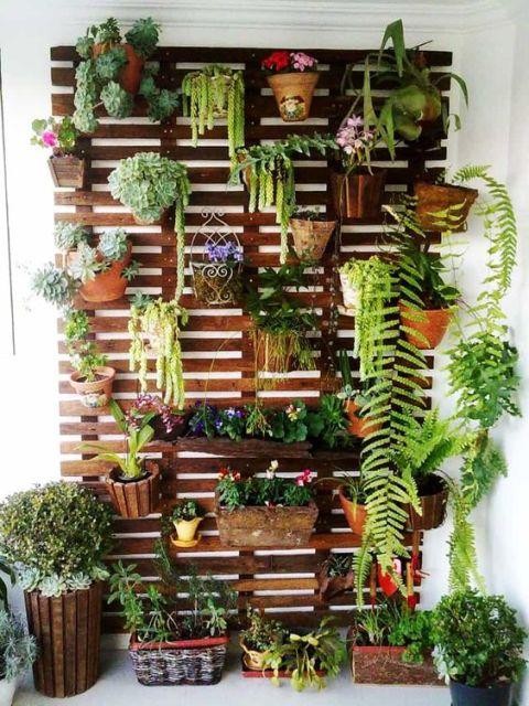 houseplants for balcony